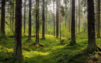 Ottieni l'attestato di Salone Sostenibile: scopri i vantaggi